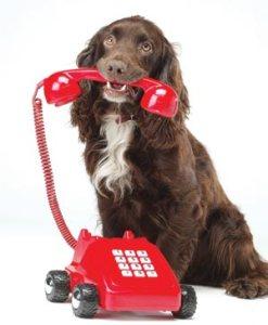 Hond-telefoon