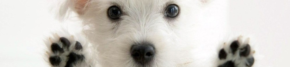 cropped-cropped-white-cute-puppy.jpg