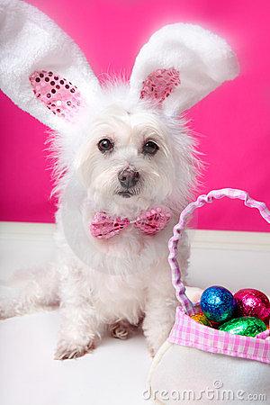 de-hond-van-pasen-met-konijntjesoren-en-eieren-24225496