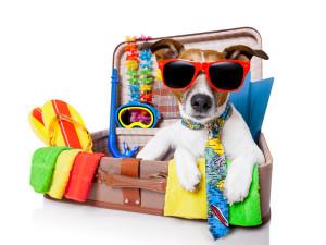 honden-op-vakantie-300x225
